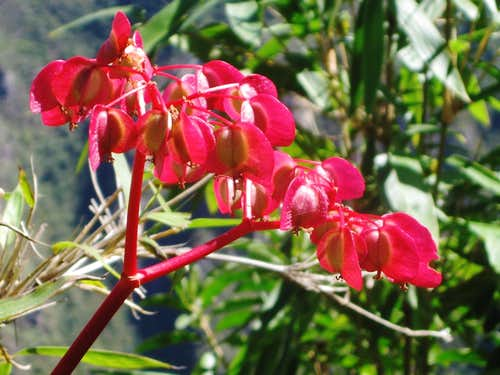 Flower at Machu Picchu
