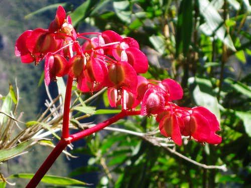 Flower at Machu Picchu