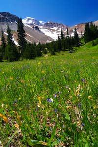 Rainier and meadows