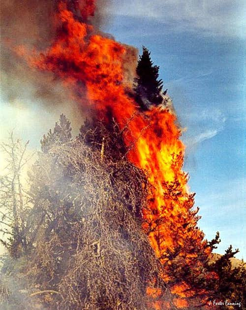 Torching Cluster, Forest Fire Album
