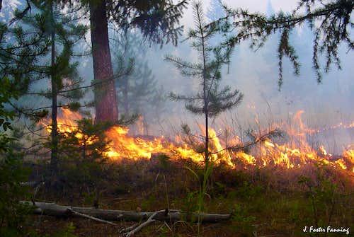 Running Grass Fire