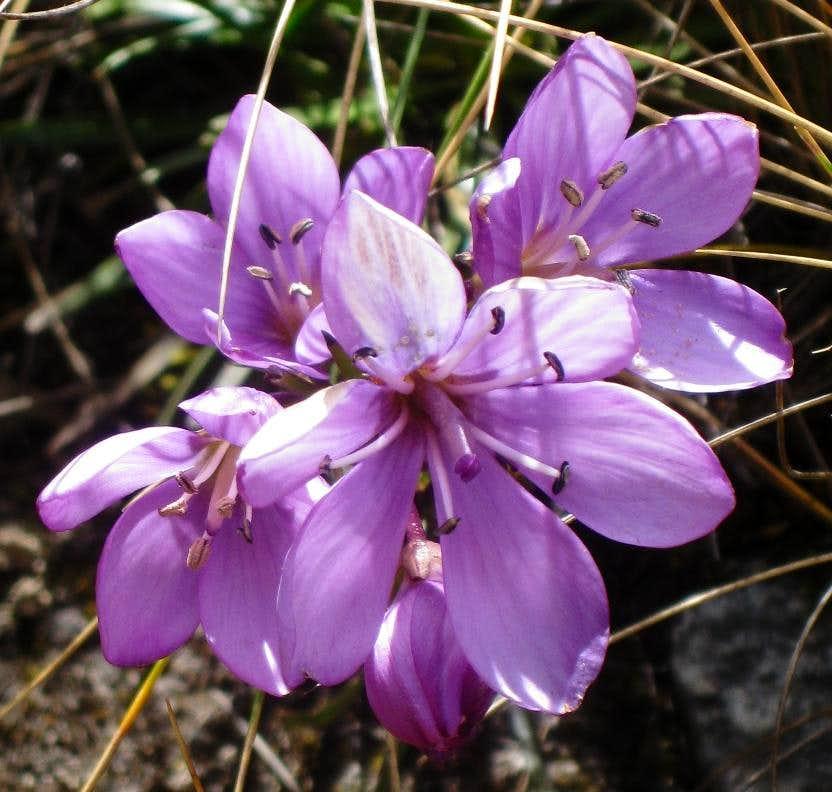 Flowers in Quebrada Llaca