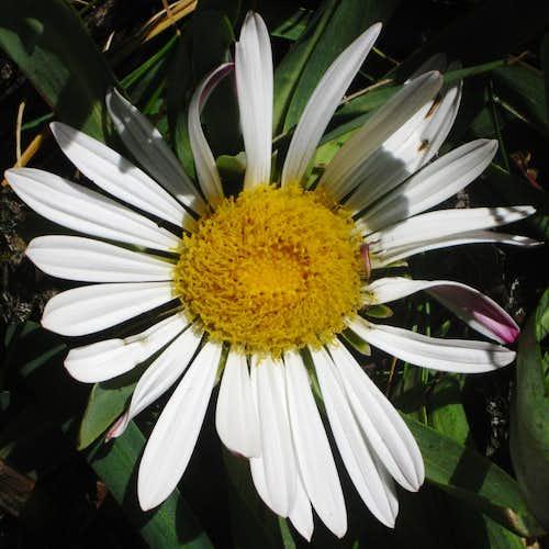 Flower in Quebrada Llaca