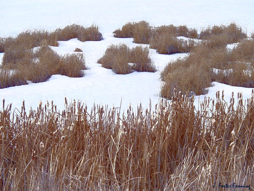 Reeds, Ice and Grass