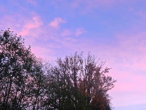 Trees with a Pink Sky