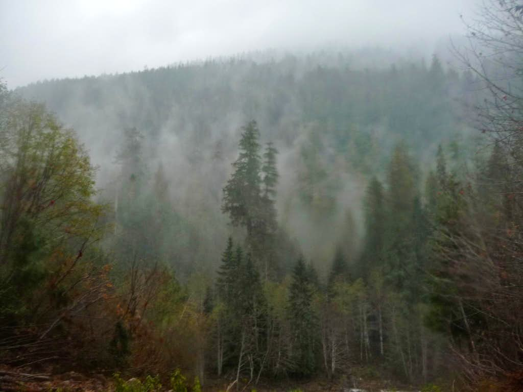 Misty Forest Above