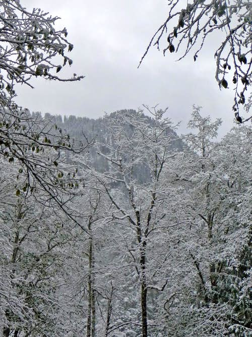 Snowy Trees from Camp