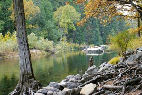 Fall colors near Merced River...