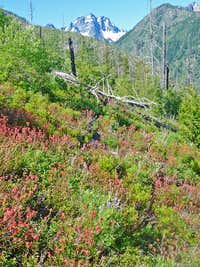 Mount Stuart with Flowers