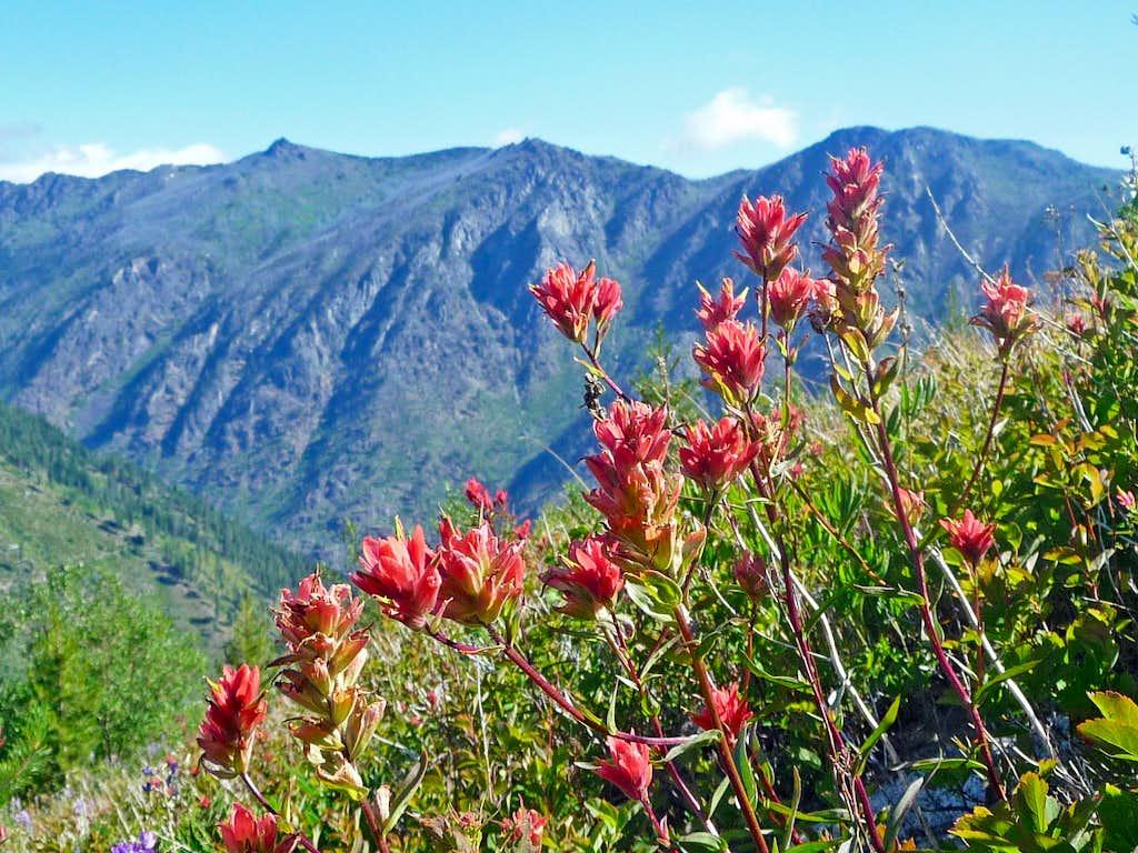 Paintbrush Flowers on Cannon Mountain