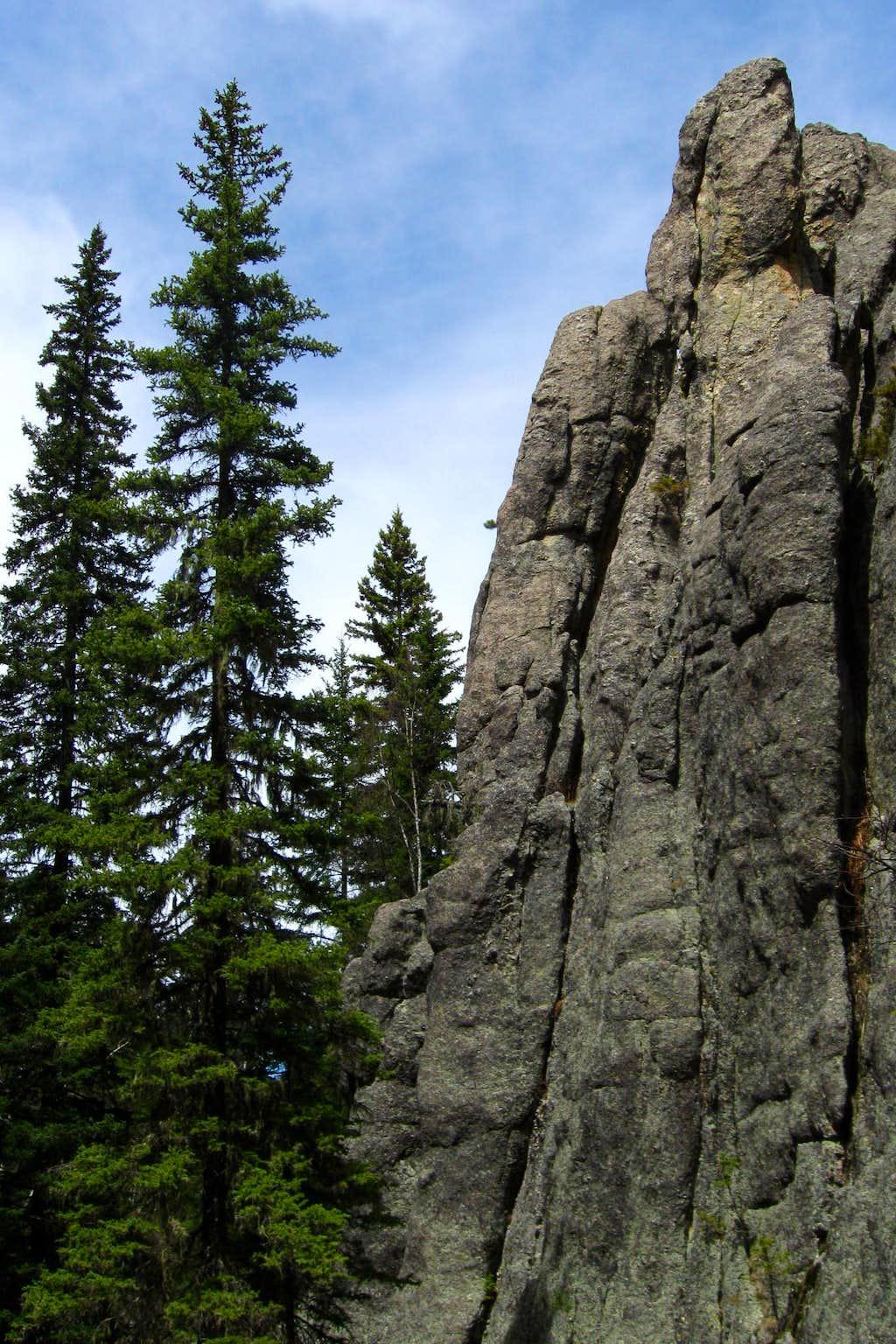 Trees & Rock