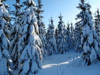 Winter fairy-tale above Altenberg and Cinovec