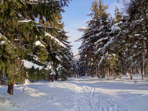East trail to Borówkowa Góra, along the border