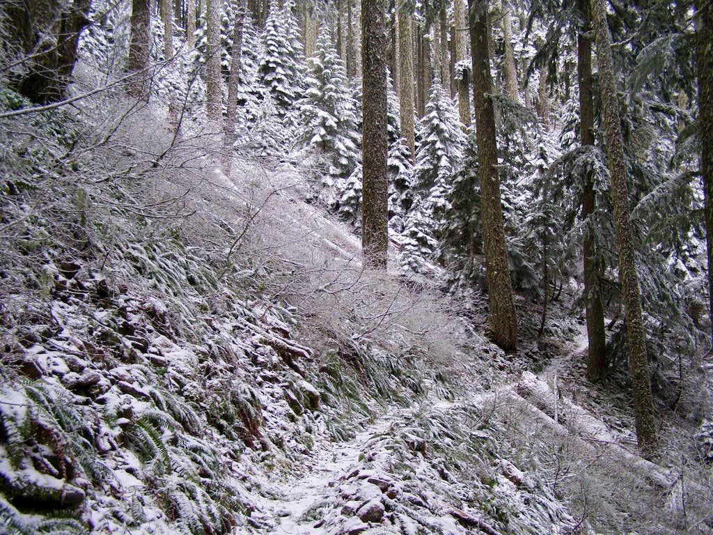 Trail Dusting