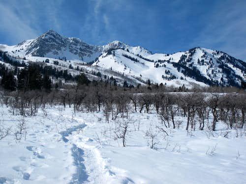 Mount Ogden