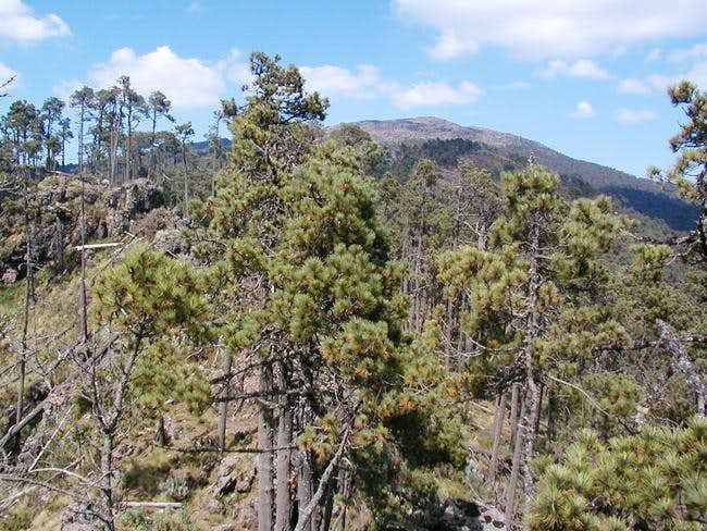 Cerro Mirador Grande's second...