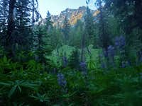 Lupines with Mount Stuart