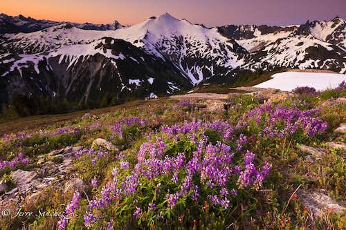 Ruth Mountain with Lupines