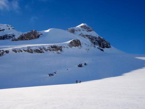 Wapta Icefield - Bow to Yoho Traverse | Mont des Poilus