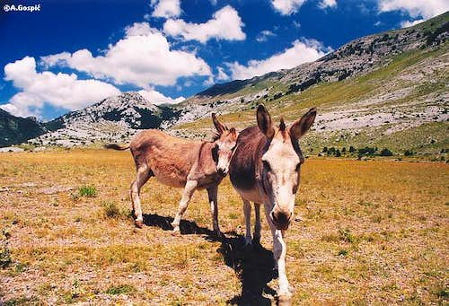 Donkey business on lower...