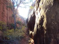 Primitive Trail Canyon