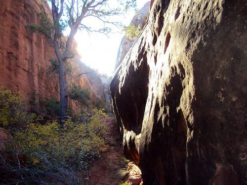 Primitive Trail Canyon