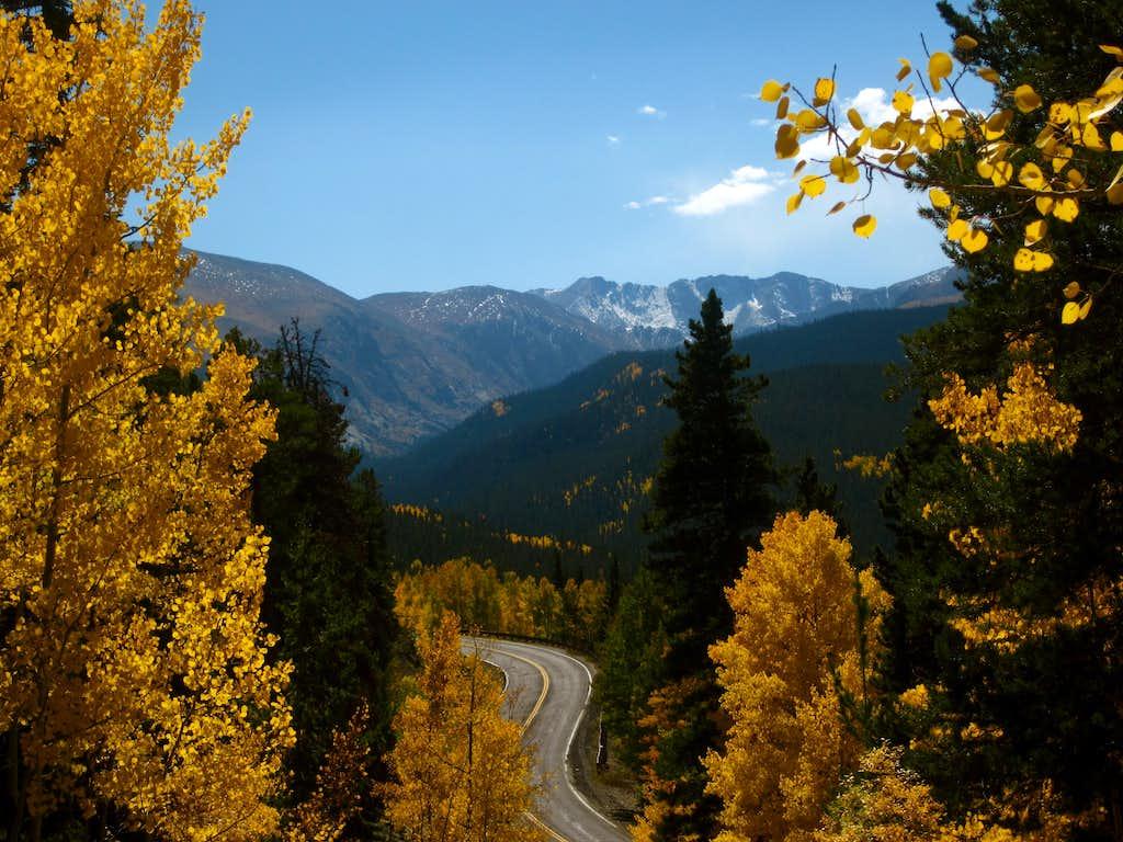 Aspen near Mount Evans