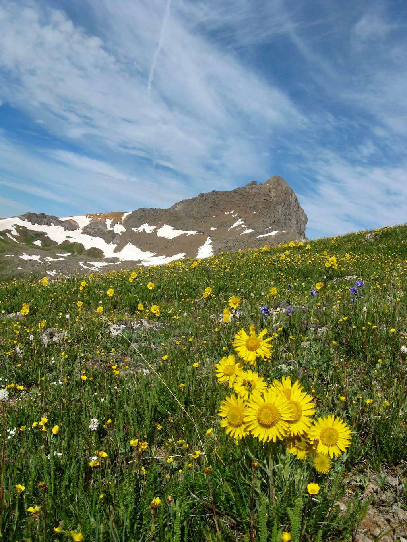 Wetterhorn Wildflowers