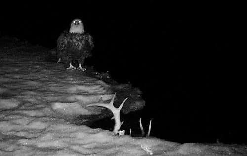 Eagle at night...