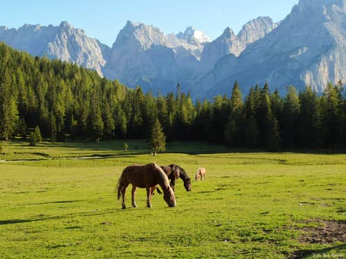 """Avelignesi"" horses nearby Misurina"