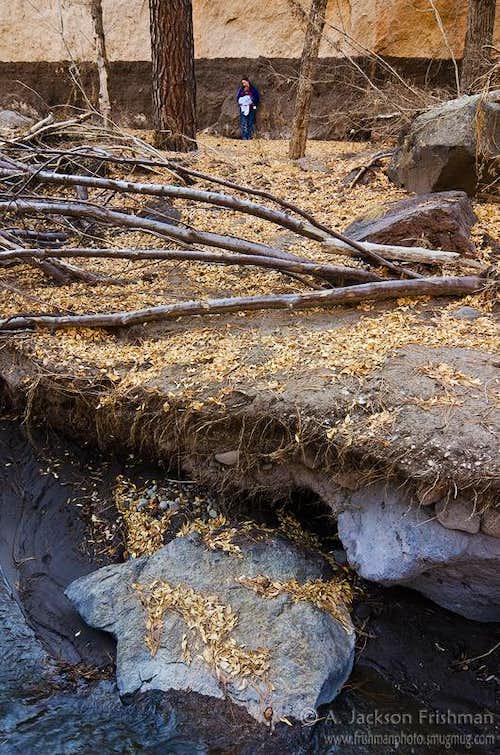 Frijoles Canyon Flood Mark