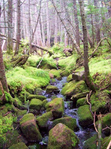 Another mossy spot along the...