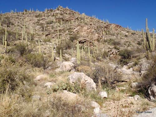 Cactus-studded lower reaches