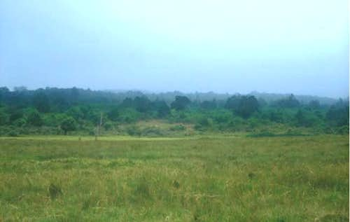 The grassy plains of Arusha...