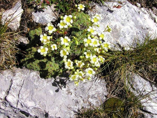 Beautiful flora in Triglav...