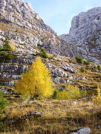 Yellow tree in Montasio