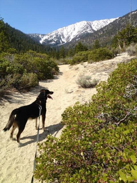 Faye Canyon Trail