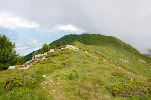 Broad backed Monte Paglione