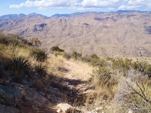 Descent from Agua Caliente Hill