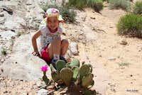 Desert Flower?