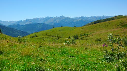 Col du Pradel: flowering thistle before the main ridge of the Pyrenees