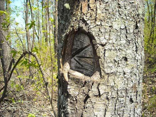 Surveyor's Marking?