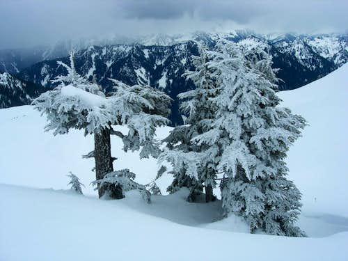 Frozen beauties.