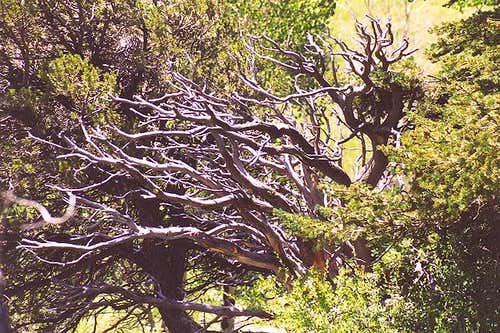 A weathered tree alongside...