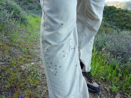 A Hiker's Guide to Ticks