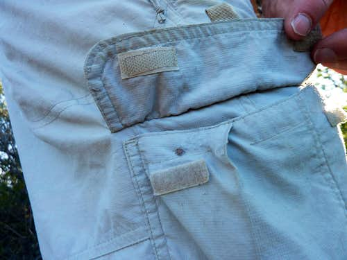 Tick under pocket flap