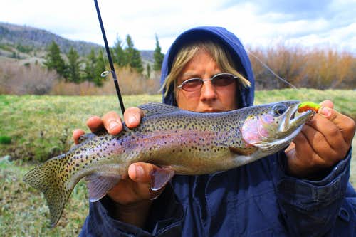 Fish Lake Rainbow Trout