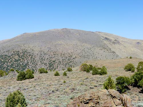 Bald Mountain – Pine Nut Mountains, NV