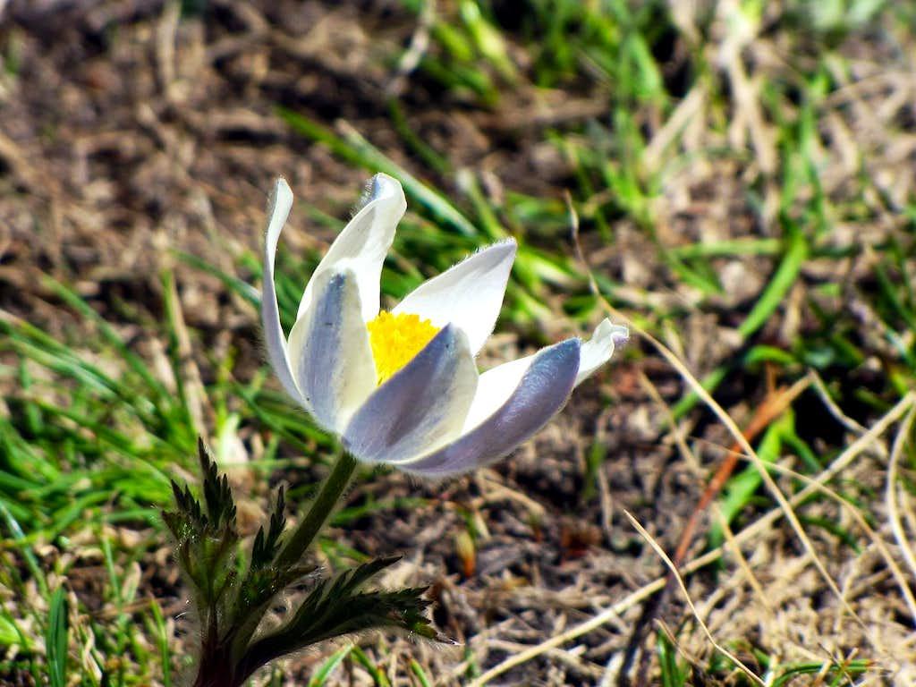 Flora in Aosta Valley