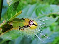 Caterpillar or <FONT COLOR=RED>THE ALIEN</FONT>???